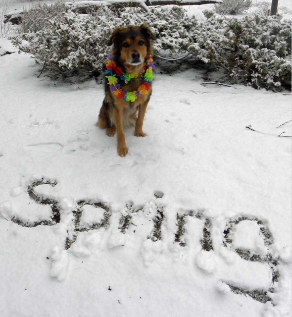 Image result for It's Spring snow