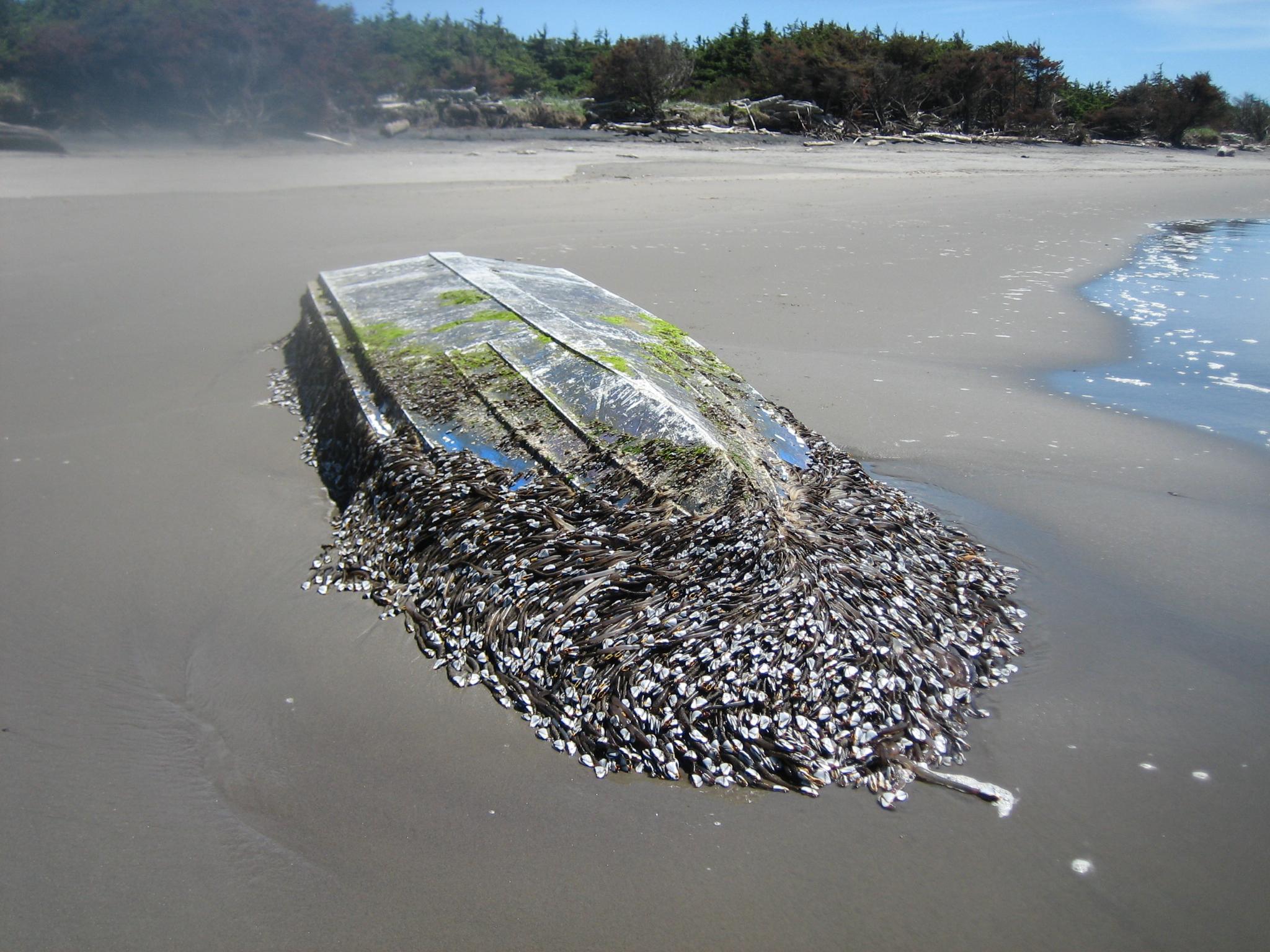 More Tsunami Debris: This Time On The Washington Coast