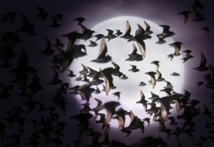 birds-night-migration