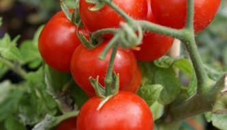 Northwest Gardeners Can Expect A Bumper Backyard Crop In 2014